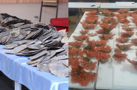 Police seize turtle shells, red corals