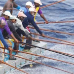 Fish exports up nearly 80 percent