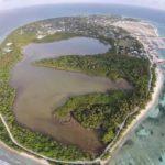 EIA warns of lasting damage from reclaiming Kulhudhufushi mangrove