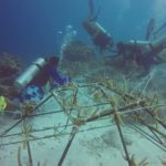 Lhaimagu youth plant coral on damaged reef