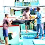Fisheries ministry fails to recover MVR51 mn