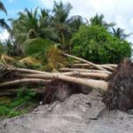Island council faces hefty fine for illegal tree removal