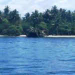 Tree removal from Vaavu island under investigation