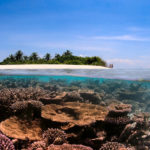 Can coral reefs keep up with a warming planet?