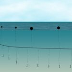 Maldives moves to disallow longline fishing